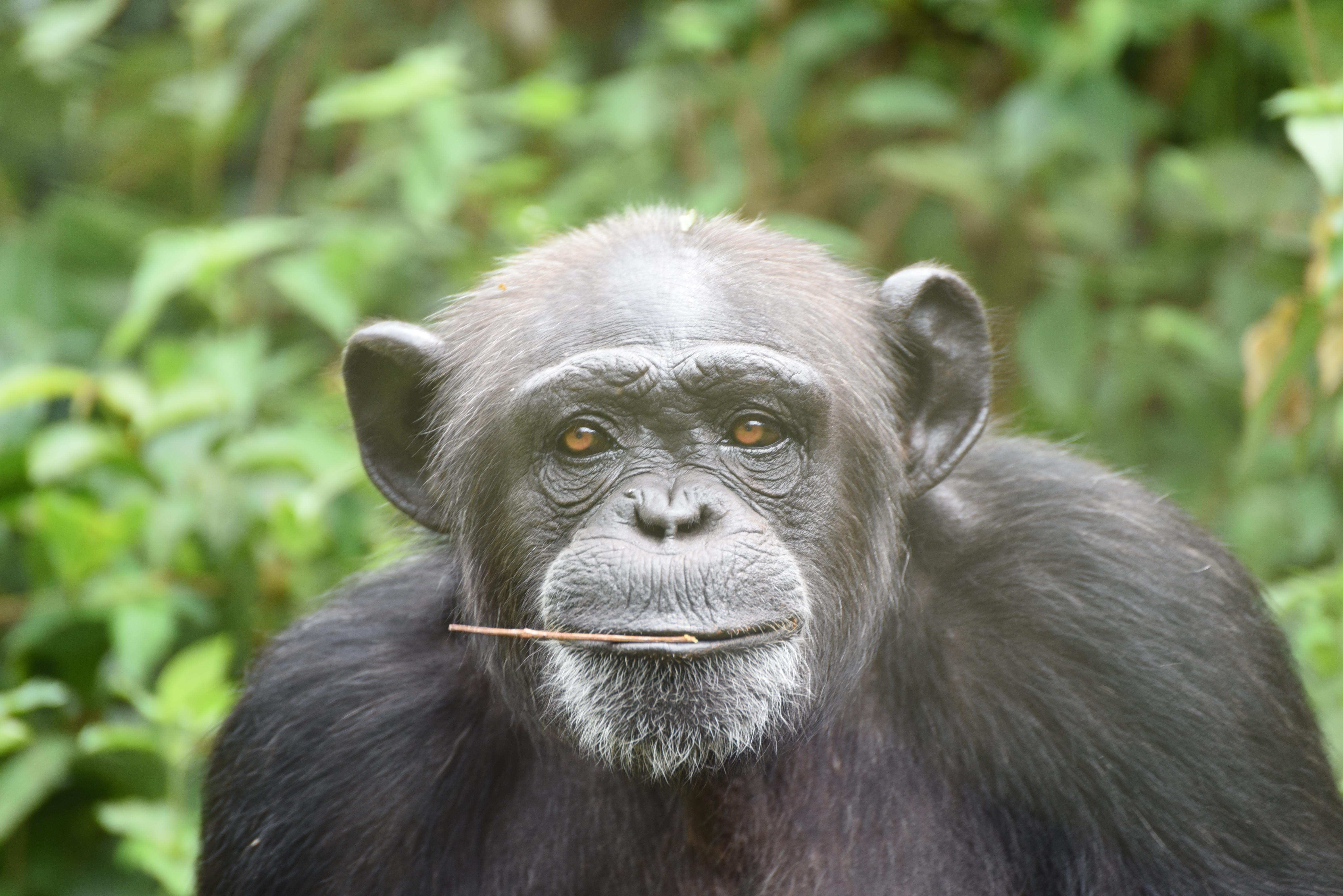 Tacugama, Sierra Leone – et afrikansk eksempel på naturbevarelse og lokal forståelse for naturen